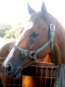 photo 3 of single horse